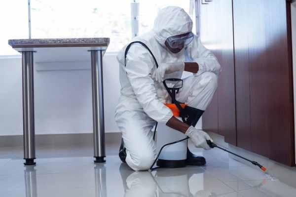 شركة مكافحة حشرات دبي 0588572030 مكافحة النمل و الذباب في دبي