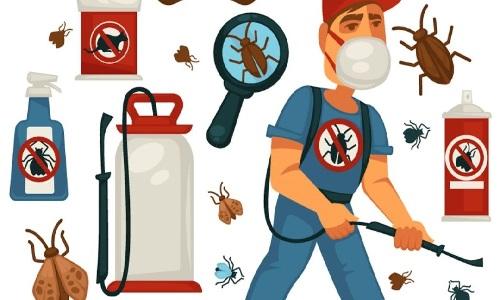 شركة مكافحة حشرات راس الخيمة 0588572030 مكافحة الصراصير والفئران والنمل والرمة والبق