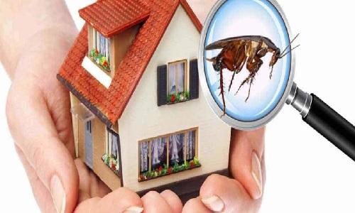 شركه مكافحه حشرات الفجيره 0588572030 مكافحة الصراصير والفئران والبق وجميع الحشرات